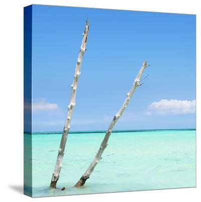 Cuba Fuerte Collection SQ - Aquatic Tree-Philippe Hugonnard-Stretched Canvas Print