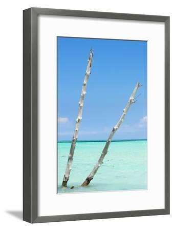 Cuba Fuerte Collection - Aquatic Tree III-Philippe Hugonnard-Framed Photographic Print