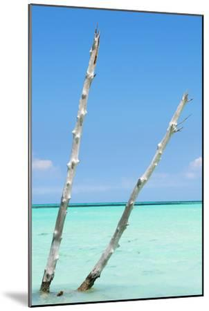 Cuba Fuerte Collection - Aquatic Tree III-Philippe Hugonnard-Mounted Photographic Print