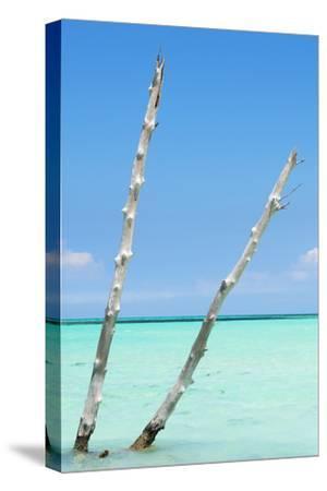 Cuba Fuerte Collection - Aquatic Tree III-Philippe Hugonnard-Stretched Canvas Print