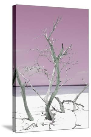Cuba Fuerte Collection - Pink Stillness II-Philippe Hugonnard-Stretched Canvas Print