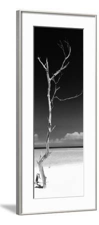 Cuba Fuerte Collection Panoramic BW - Solitary Tree-Philippe Hugonnard-Framed Photographic Print