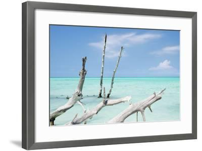 Cuba Fuerte Collection - White Trees II-Philippe Hugonnard-Framed Photographic Print