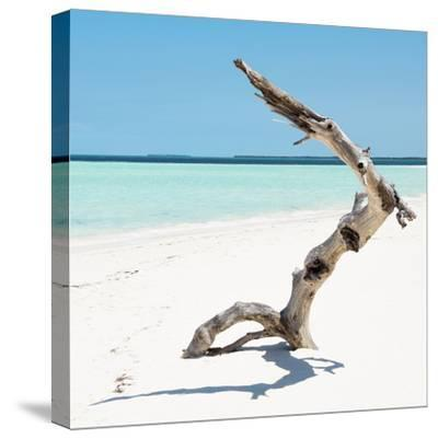 Cuba Fuerte Collection SQ - Wild Tree-Philippe Hugonnard-Stretched Canvas Print