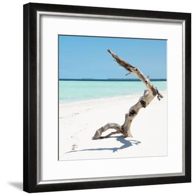 Cuba Fuerte Collection SQ - Wild Tree-Philippe Hugonnard-Framed Photographic Print
