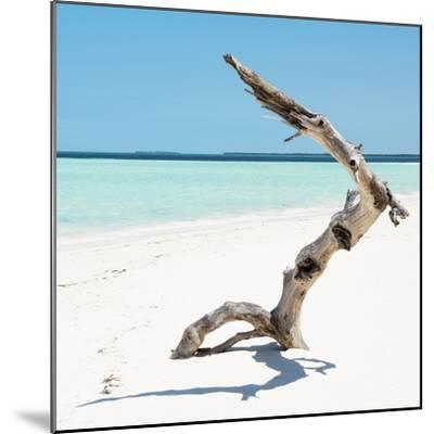 Cuba Fuerte Collection SQ - Wild Tree-Philippe Hugonnard-Mounted Photographic Print