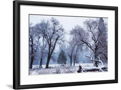 Magical Snow in the Valley El Capitan Meadow Trees & Mist Yosemite Valley-Vincent James-Framed Photographic Print