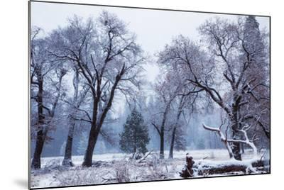 Magical Snow in the Valley El Capitan Meadow Trees & Mist Yosemite Valley-Vincent James-Mounted Photographic Print