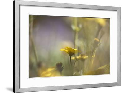 Rainbows and Buttercups-Valda Bailey-Framed Photographic Print