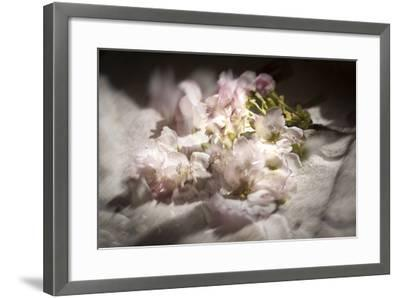 Clouds of Blossom-Valda Bailey-Framed Photographic Print