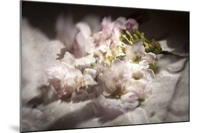 Clouds of Blossom-Valda Bailey-Mounted Photographic Print
