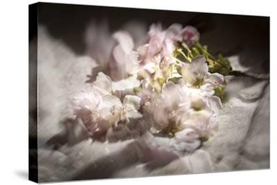 Clouds of Blossom-Valda Bailey-Stretched Canvas Print