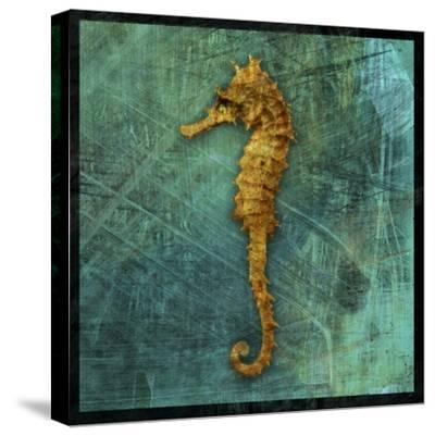 Seahorse-John W Golden-Stretched Canvas Print