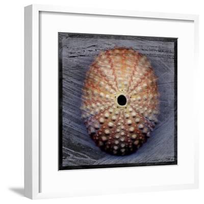 Sea Urchin 1-John W Golden-Framed Giclee Print