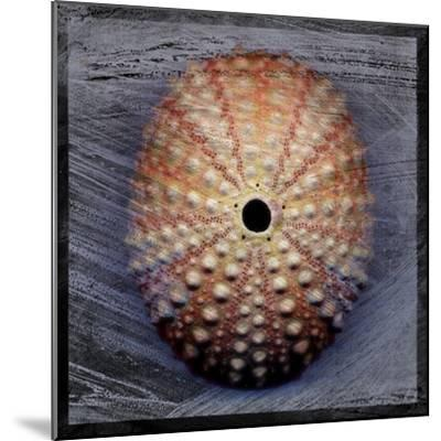 Sea Urchin 1-John W Golden-Mounted Giclee Print