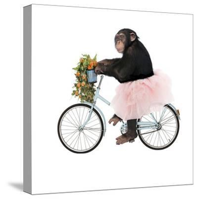 Monkeys Riding Bikes #1-J Hovenstine Studios-Stretched Canvas Print