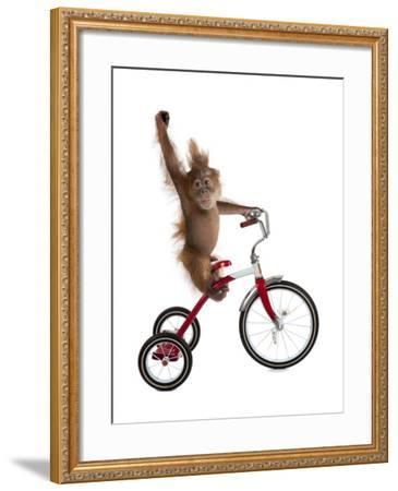 Monkeys Riding Bikes #2-J Hovenstine Studios-Framed Giclee Print