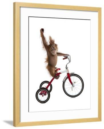 Monkeys Riding Bikes #2-J Hovenstine Studios-Framed Giclee Print