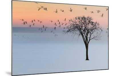 Good Day-Andre Villeneuve-Mounted Photographic Print