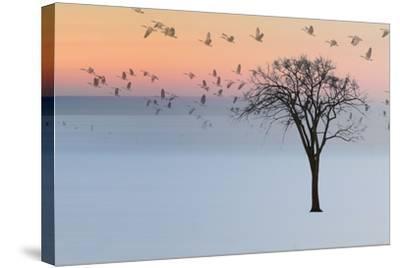 Good Day-Andre Villeneuve-Stretched Canvas Print