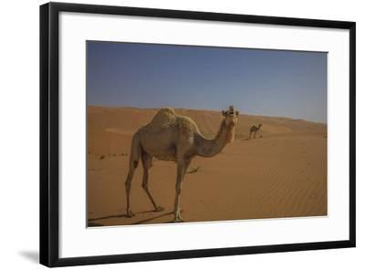 Camel Looking At Camera-Matias Jason-Framed Photographic Print