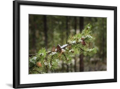 First Snowfall YNP-Galloimages Online-Framed Photographic Print