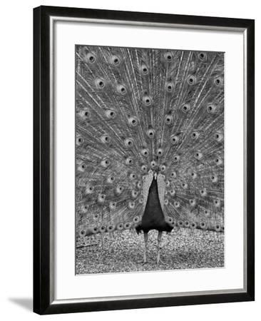 The Myth of Argus-Geoffrey Ansel Agrons-Framed Photographic Print