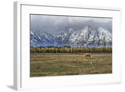 Fine Dining In The Tetons-Galloimages Online-Framed Photographic Print