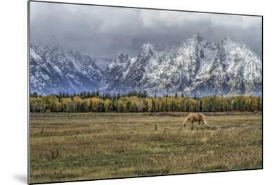 Fine Dining In The Tetons-Galloimages Online-Mounted Photographic Print