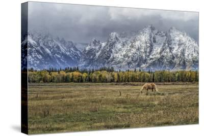 Fine Dining In The Tetons-Galloimages Online-Stretched Canvas Print