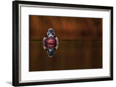Wood Duck And His Reflex-Andre Villeneuve-Framed Photographic Print