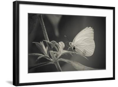 Patiently Wait-Chris Moyer-Framed Photographic Print