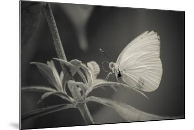 Patiently Wait-Chris Moyer-Mounted Photographic Print