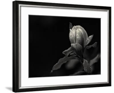 Everything's Gonna Be Everything-Geoffrey Ansel Agrons-Framed Photographic Print