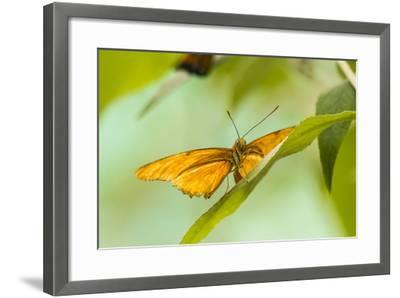The Lookout-Chris Moyer-Framed Photographic Print
