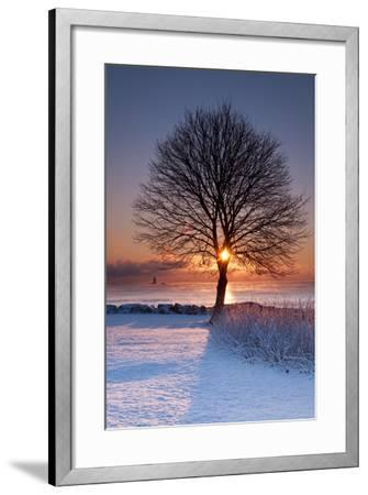 Sun In Tree-Michael Blanchette Photography-Framed Photographic Print