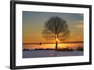Eye of the Tree-Michael Blanchette Photography-Framed Photographic Print