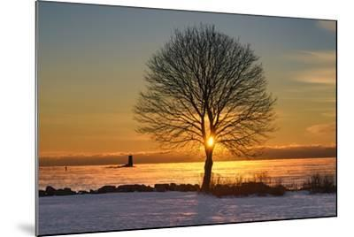 Eye of the Tree-Michael Blanchette Photography-Mounted Photographic Print