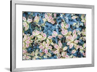 Flores Silvestres-Moises Levy-Framed Photographic Print