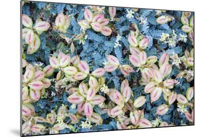 Flores Silvestres-Moises Levy-Mounted Photographic Print