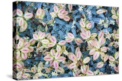 Flores Silvestres-Moises Levy-Stretched Canvas Print