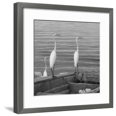 Garzas-3-Moises Levy-Framed Photographic Print