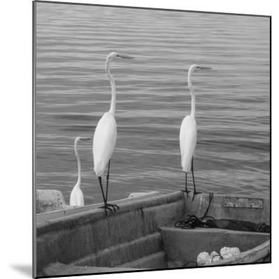 Garzas-3-Moises Levy-Mounted Photographic Print