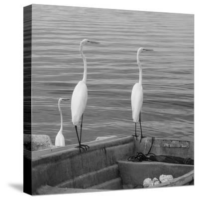 Garzas-3-Moises Levy-Stretched Canvas Print