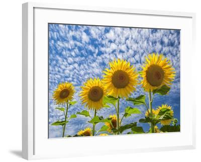The Four Sisters-Michael Blanchette Photography-Framed Photographic Print