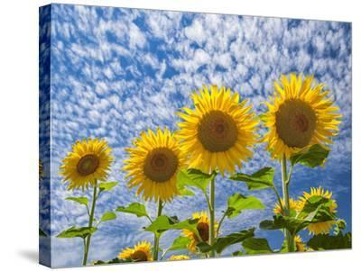 The Four Sisters-Michael Blanchette Photography-Stretched Canvas Print