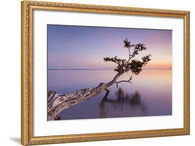 Water Tree XV-Moises Levy-Framed Photographic Print
