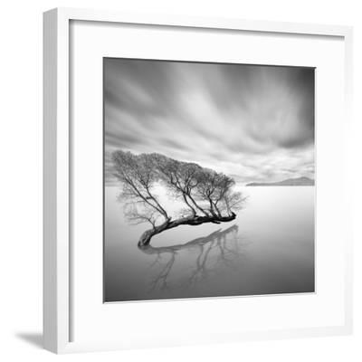 Water Tree VII-Moises Levy-Framed Photographic Print