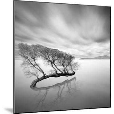 Water Tree VII-Moises Levy-Mounted Photographic Print