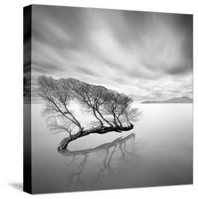 Water Tree VII-Moises Levy-Stretched Canvas Print